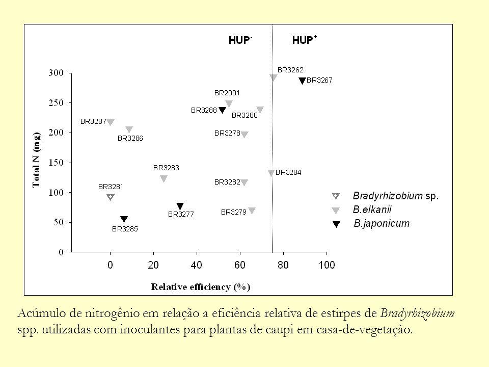 Acúmulo de nitrogênio em relação a eficiência relativa de estirpes de Bradyrhizobium spp.