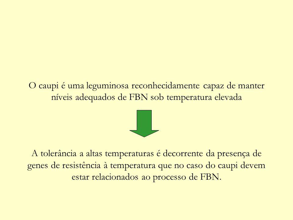 O caupi é uma leguminosa reconhecidamente capaz de manter níveis adequados de FBN sob temperatura elevada