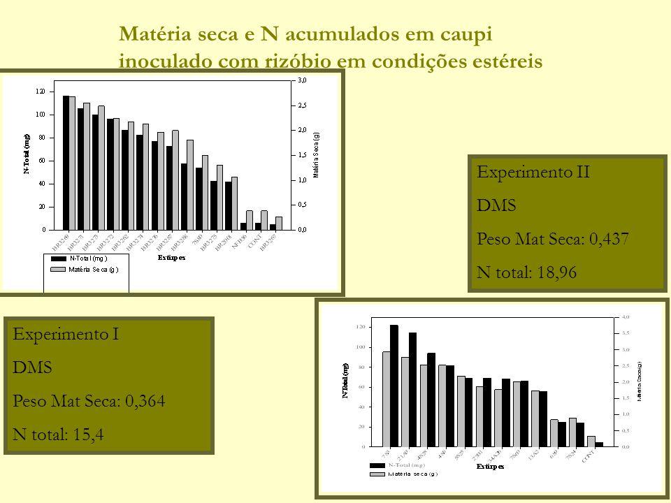Matéria seca e N acumulados em caupi inoculado com rizóbio em condições estéreis