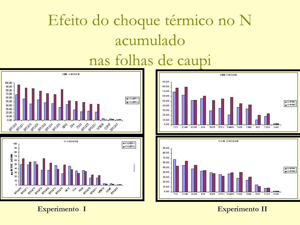 Efeito do choque térmico no N acumulado nas folhas de caupi