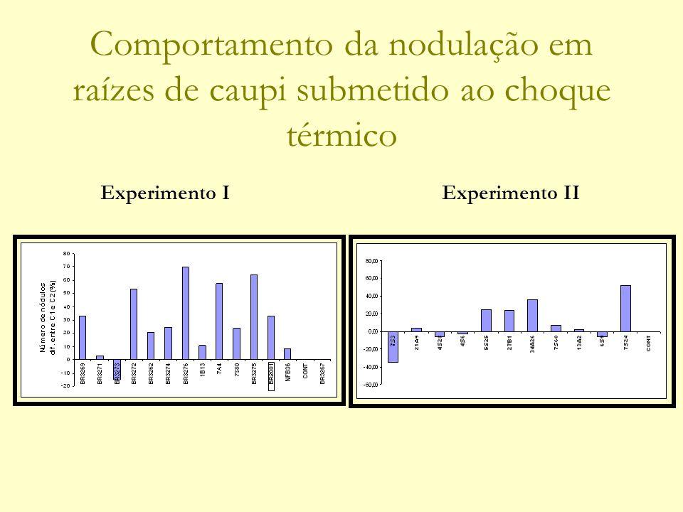 Comportamento da nodulação em raízes de caupi submetido ao choque térmico