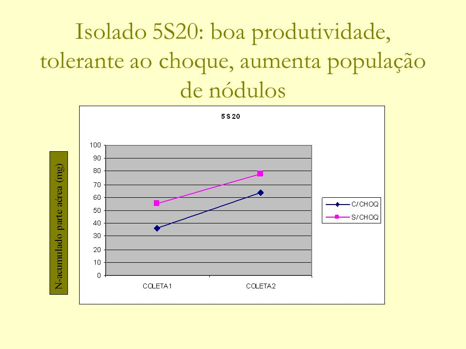 Isolado 5S20: boa produtividade, tolerante ao choque, aumenta população de nódulos