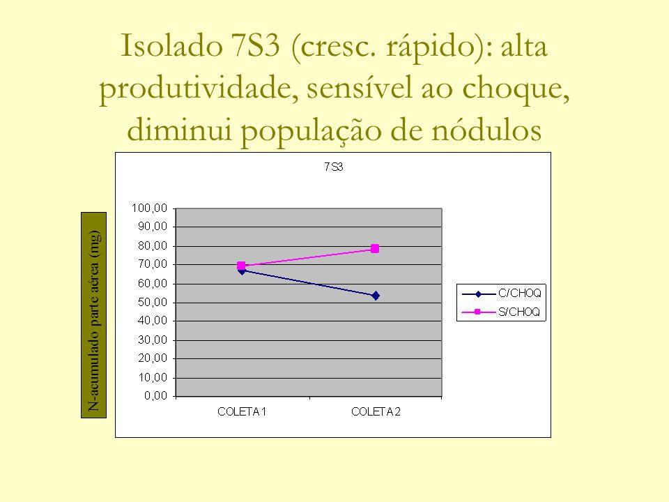 Isolado 7S3 (cresc. rápido): alta produtividade, sensível ao choque, diminui população de nódulos