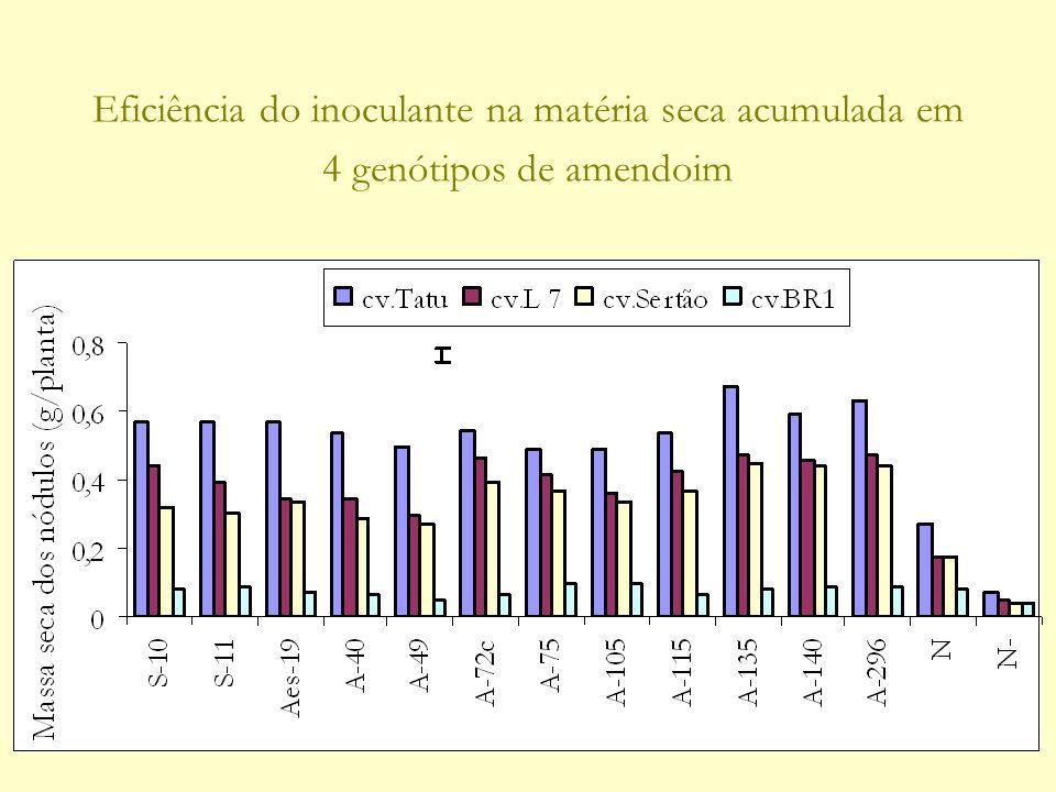 Eficiência do inoculante na matéria seca acumulada em 4 genótipos de amendoim