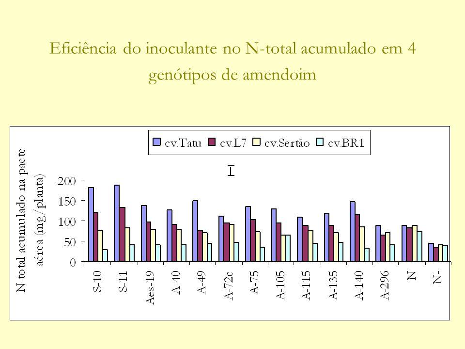 Eficiência do inoculante no N-total acumulado em 4 genótipos de amendoim