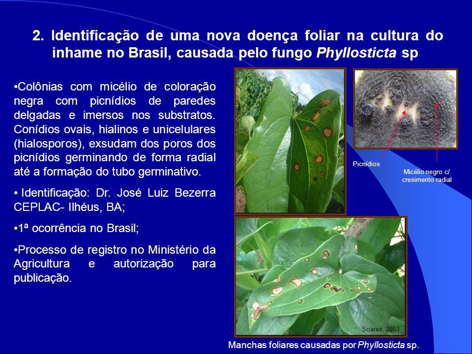 2. Identificação de uma nova doença foliar na cultura do inhame no Brasil, causada pelo fungo Phyllosticta sp