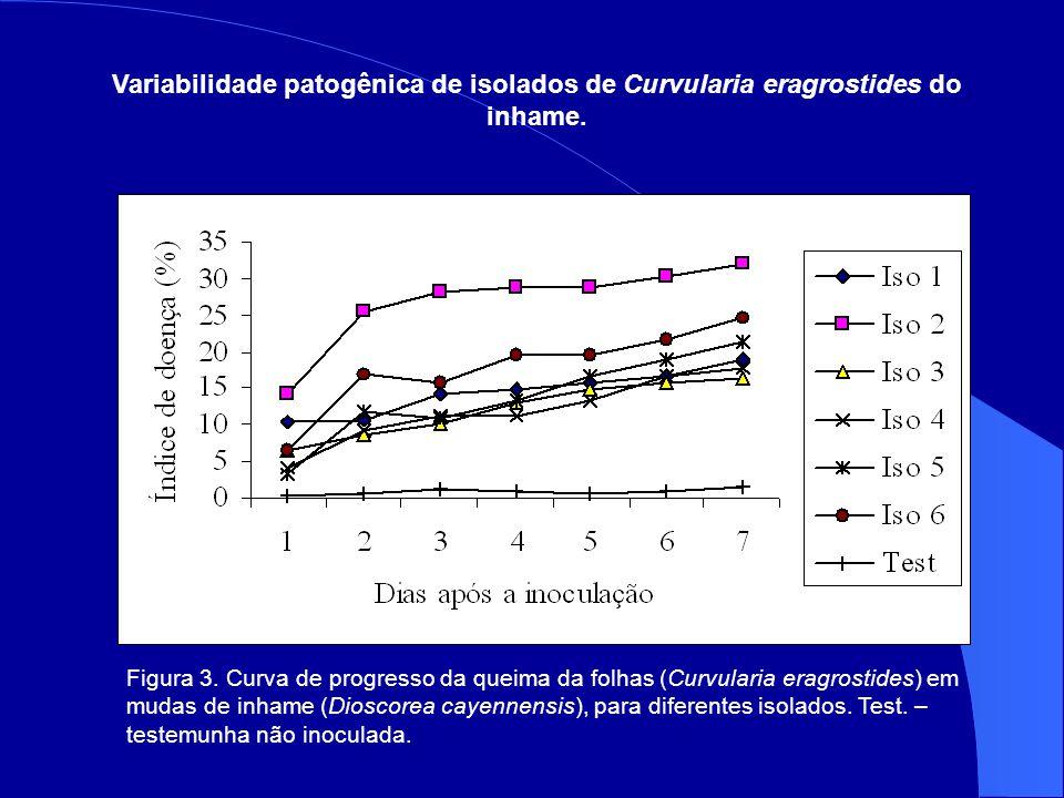 Variabilidade patogênica de isolados de Curvularia eragrostides do inhame.