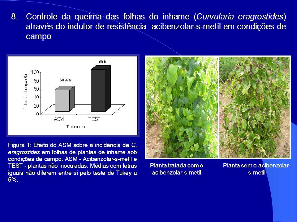 Controle da queima das folhas do inhame (Curvularia eragrostides) através do indutor de resistência acibenzolar-s-metil em condições de campo
