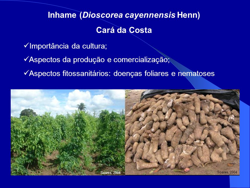 Inhame (Dioscorea cayennensis Henn)