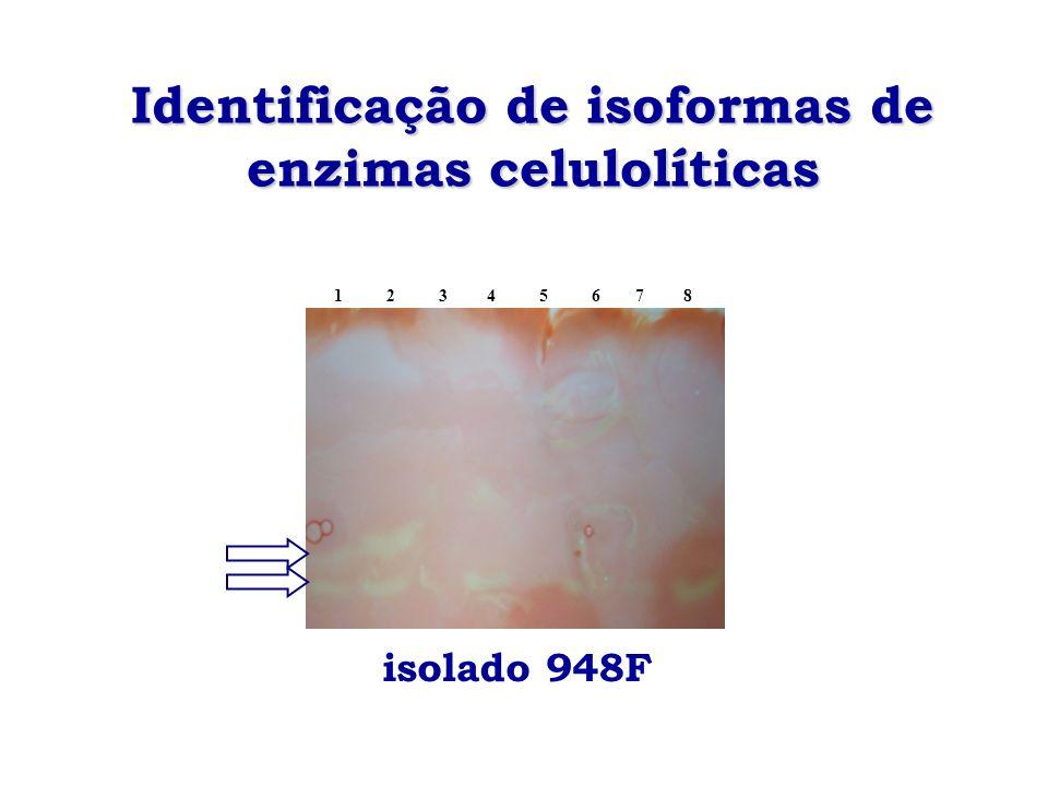 Identificação de isoformas de enzimas celulolíticas