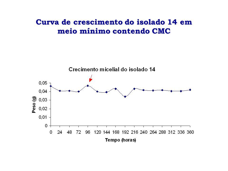 Curva de crescimento do isolado 14 em meio mínimo contendo CMC