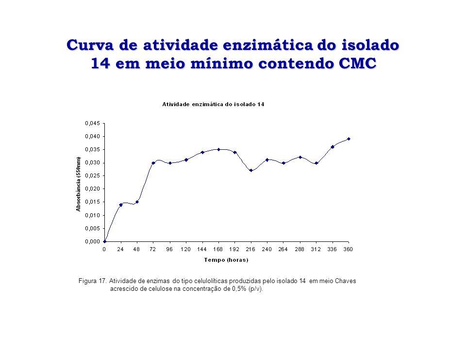 Curva de atividade enzimática do isolado 14 em meio mínimo contendo CMC
