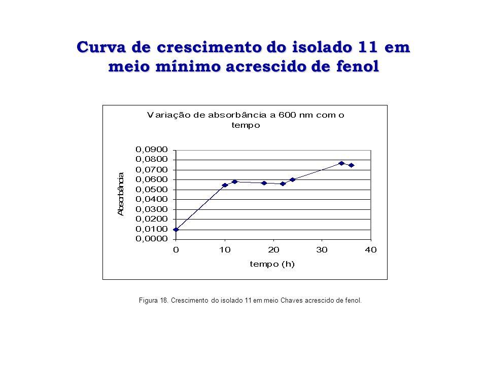 Curva de crescimento do isolado 11 em meio mínimo acrescido de fenol