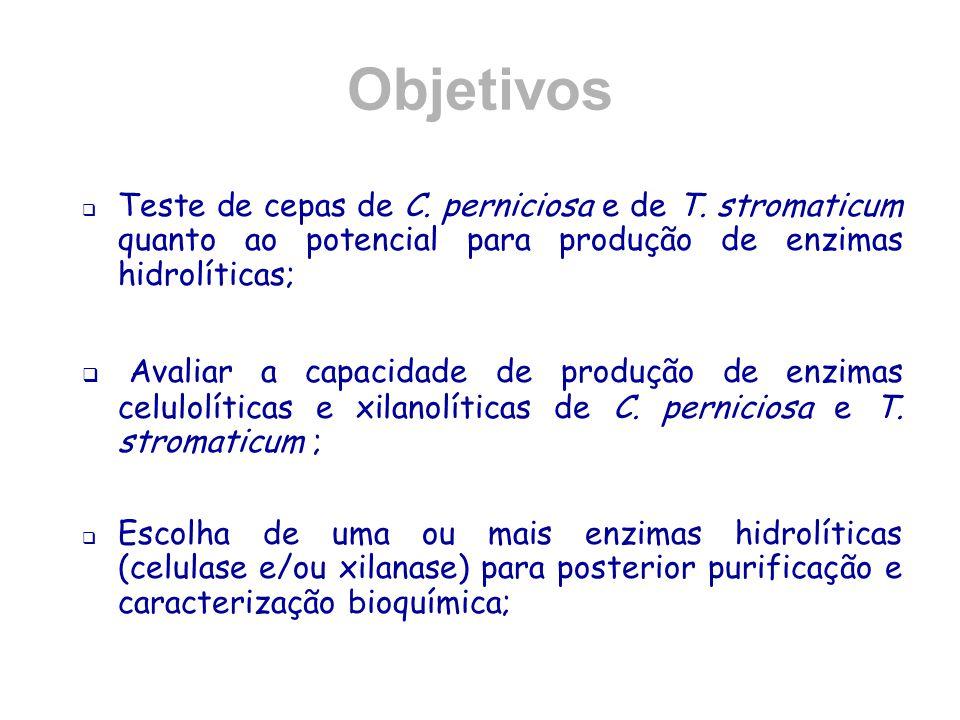 Objetivos Teste de cepas de C. perniciosa e de T. stromaticum quanto ao potencial para produção de enzimas hidrolíticas;