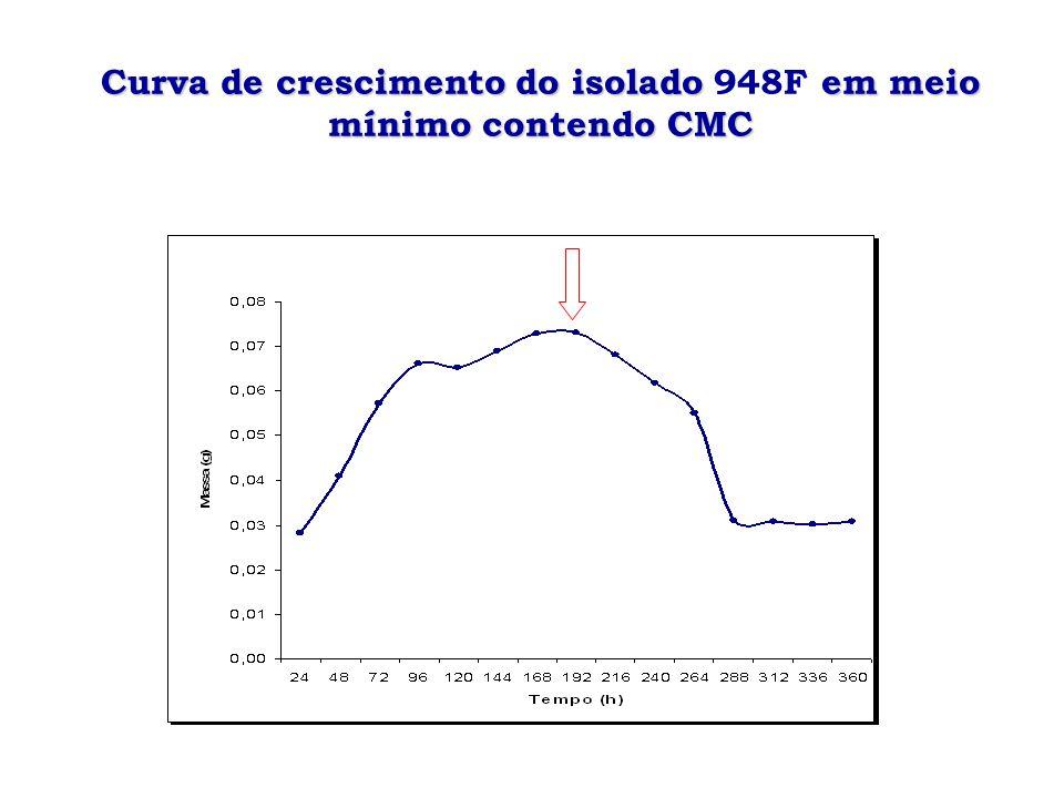 Curva de crescimento do isolado 948F em meio mínimo contendo CMC