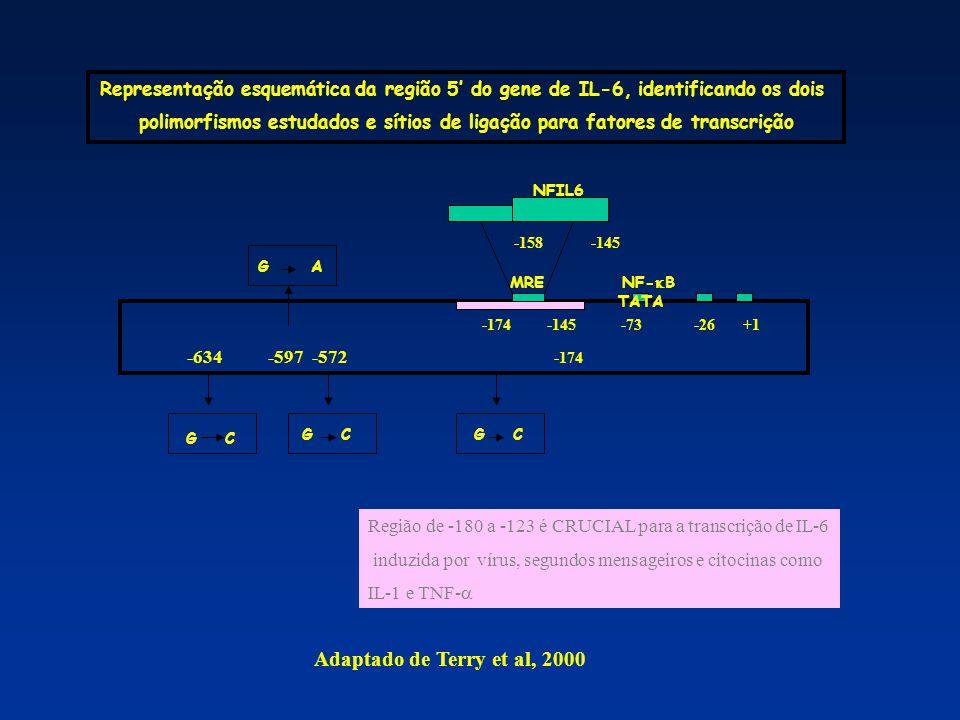 Representação esquemática da região 5' do gene de IL-6, identificando os dois