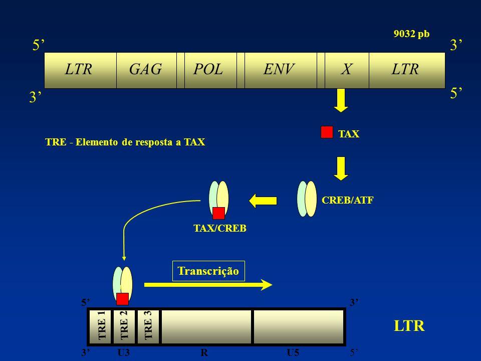 LTR GAG POL ENV X LTR 5' 3' LTR Transcrição 9032 pb TAX