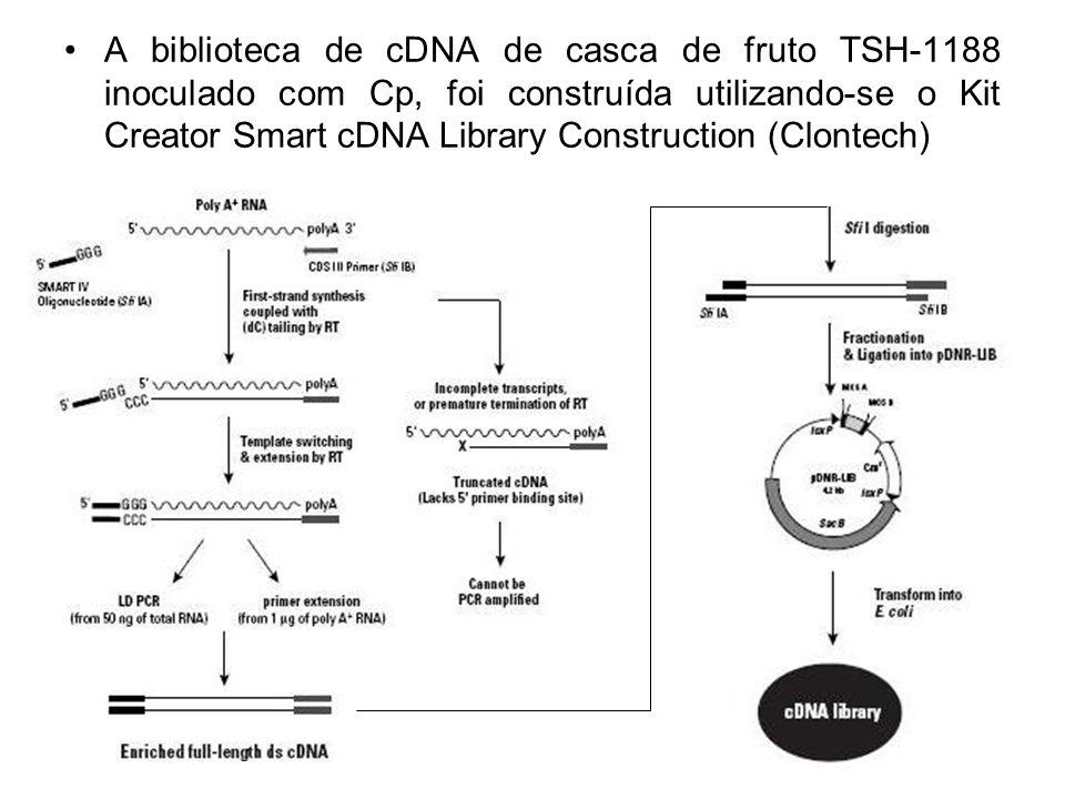 A biblioteca de cDNA de casca de fruto TSH-1188 inoculado com Cp, foi construída utilizando-se o Kit Creator Smart cDNA Library Construction (Clontech)