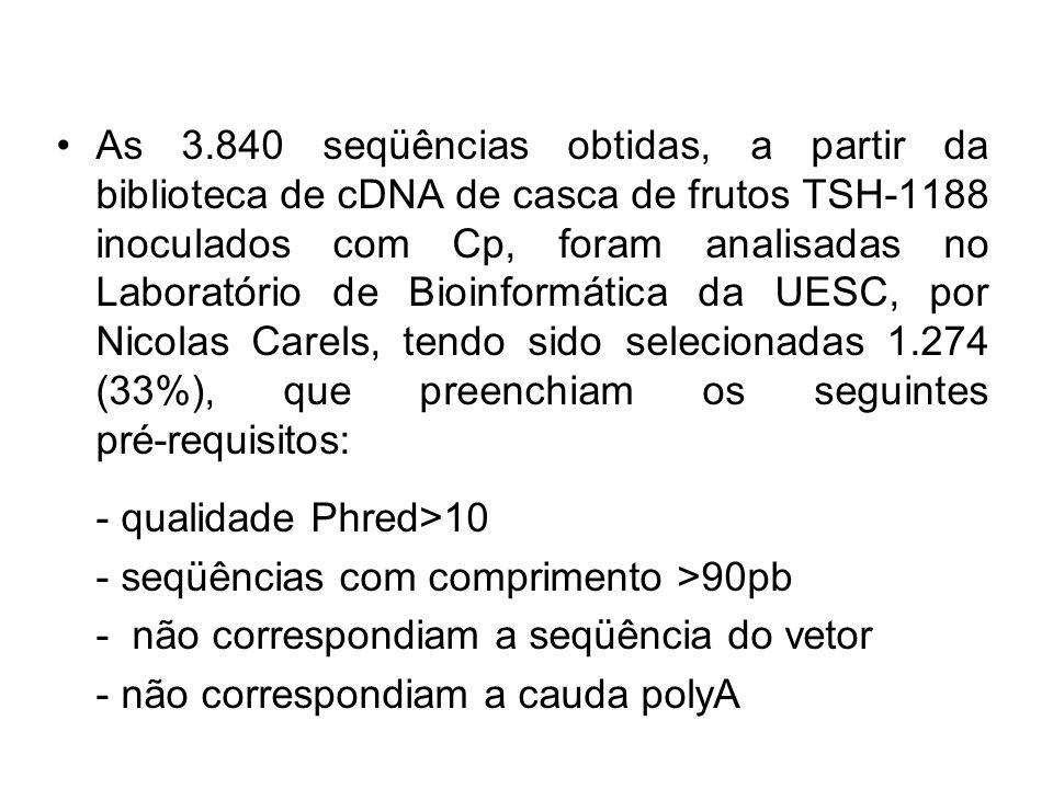As 3.840 seqüências obtidas, a partir da biblioteca de cDNA de casca de frutos TSH-1188 inoculados com Cp, foram analisadas no Laboratório de Bioinformática da UESC, por Nicolas Carels, tendo sido selecionadas 1.274 (33%), que preenchiam os seguintes pré-requisitos: