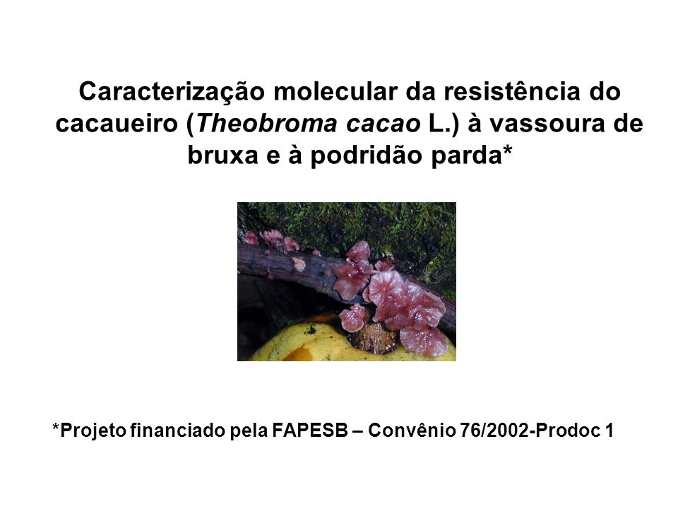*Projeto financiado pela FAPESB – Convênio 76/2002-Prodoc 1