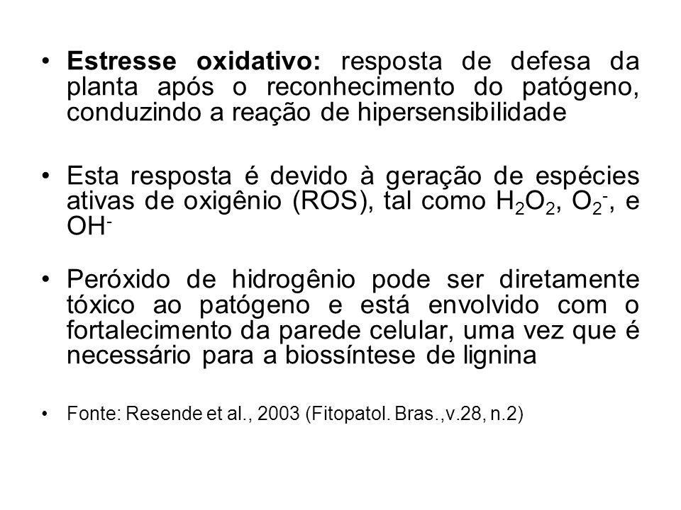 Estresse oxidativo: resposta de defesa da planta após o reconhecimento do patógeno, conduzindo a reação de hipersensibilidade