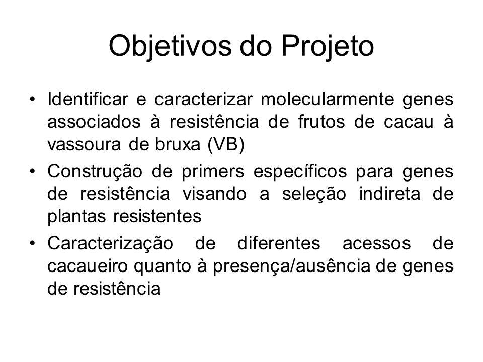 Objetivos do Projeto Identificar e caracterizar molecularmente genes associados à resistência de frutos de cacau à vassoura de bruxa (VB)