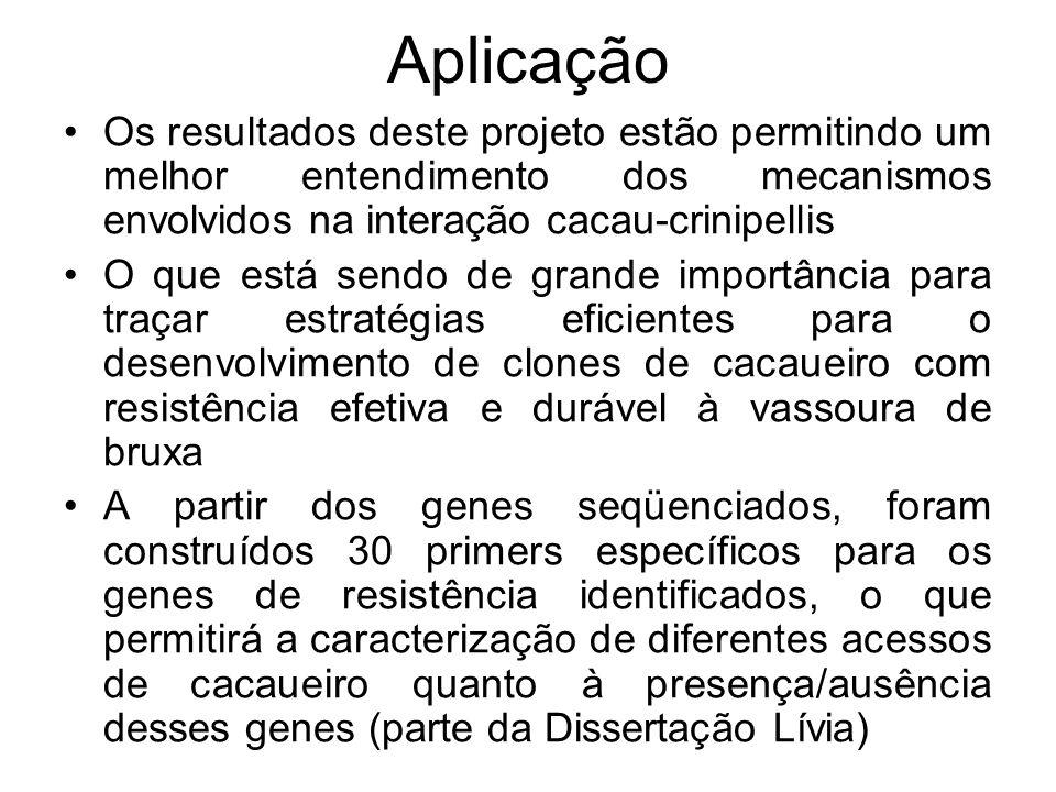 Aplicação Os resultados deste projeto estão permitindo um melhor entendimento dos mecanismos envolvidos na interação cacau-crinipellis.