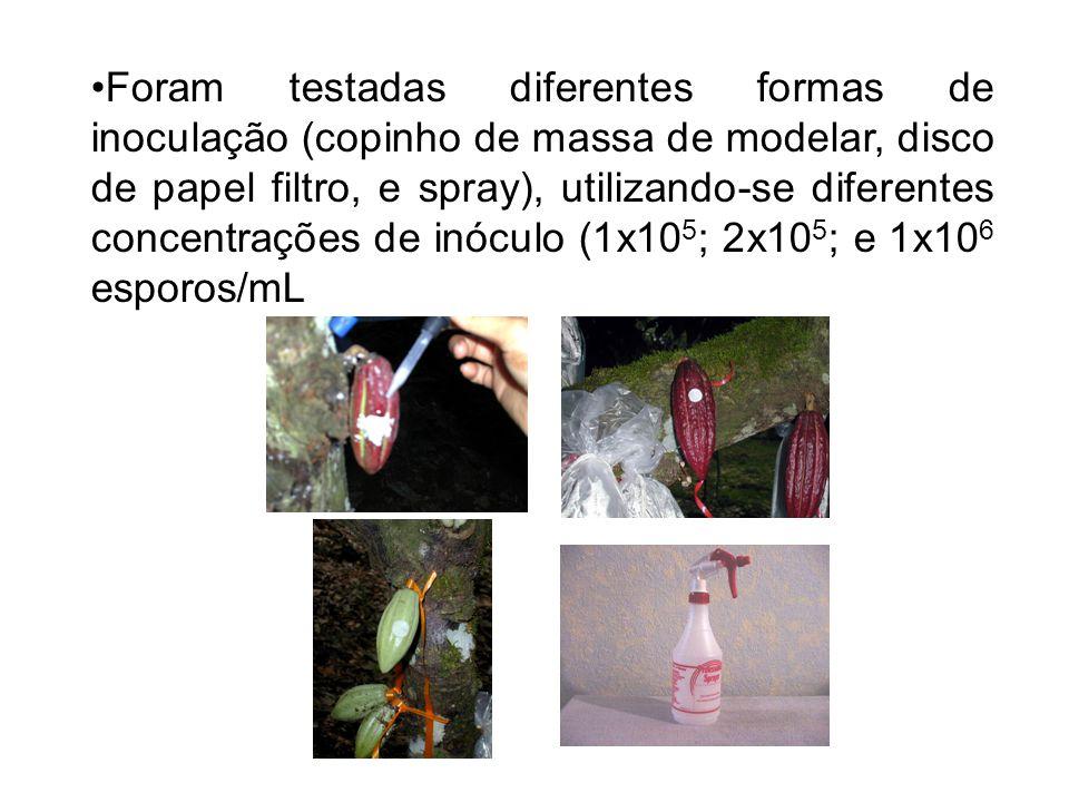 Foram testadas diferentes formas de inoculação (copinho de massa de modelar, disco de papel filtro, e spray), utilizando-se diferentes concentrações de inóculo (1x105; 2x105; e 1x106 esporos/mL