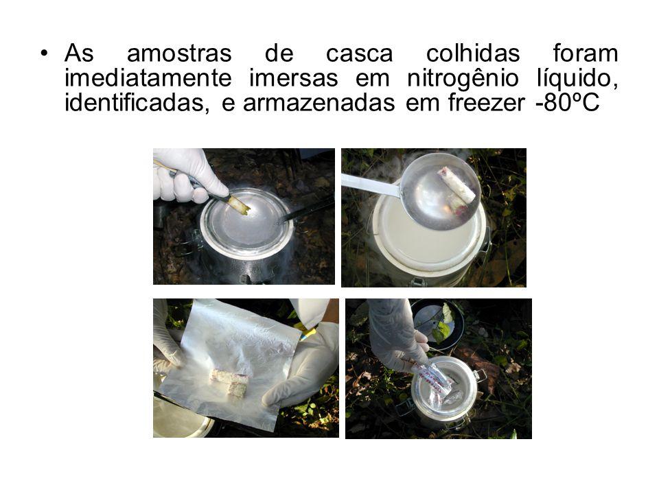 As amostras de casca colhidas foram imediatamente imersas em nitrogênio líquido, identificadas, e armazenadas em freezer -80ºC