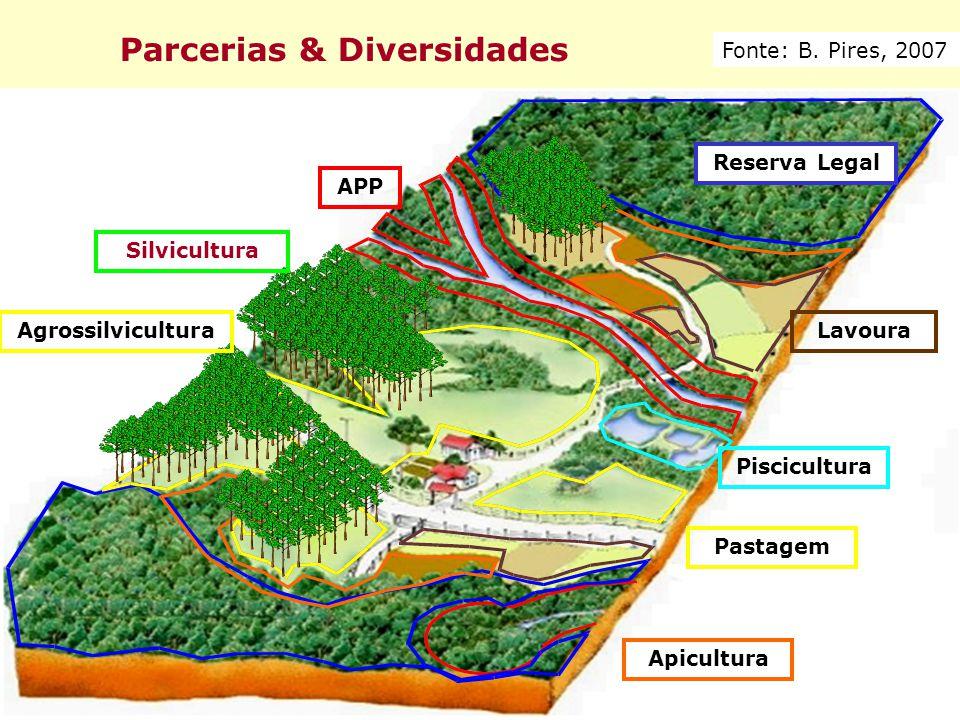 Parcerias & Diversidades