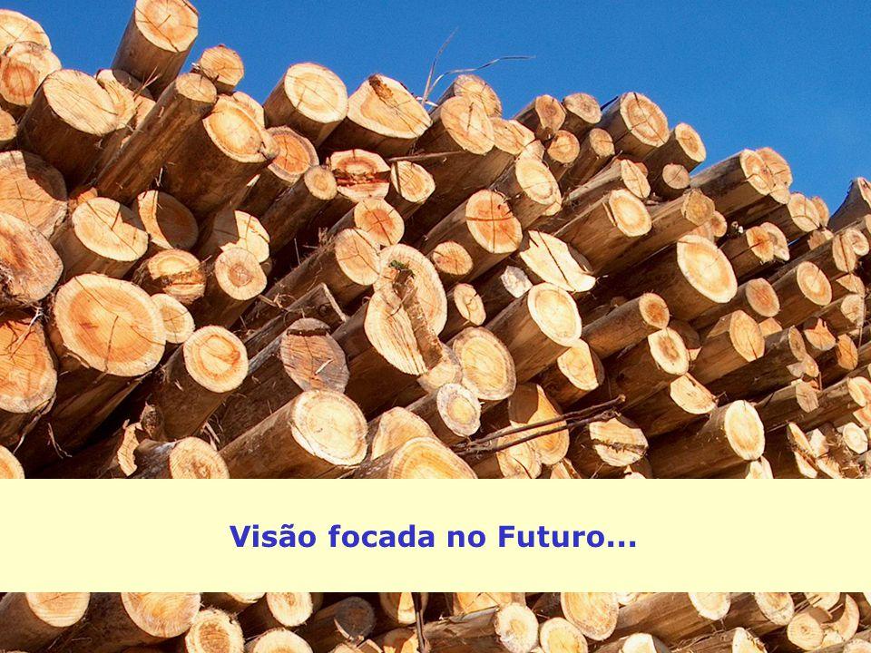 Visão focada no Futuro...