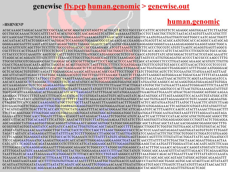 genewise fly.pep human.genomic > genewise.out