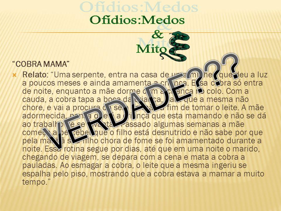 VERDADE Ofídios:Medos & Mito COBRA MAMA