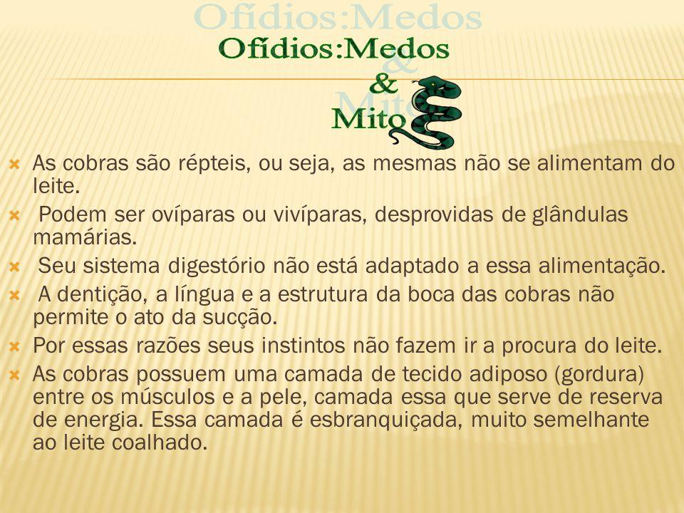 Ofídios:Medos & Mito. As cobras são répteis, ou seja, as mesmas não se alimentam do leite.
