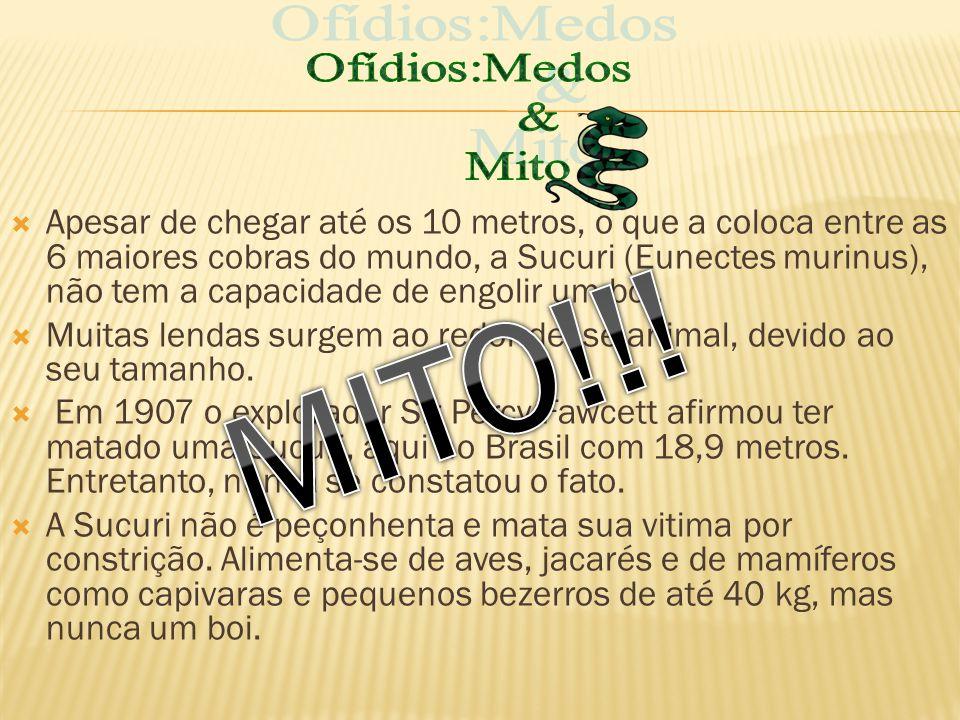 MITO!!! Ofídios:Medos & Mito