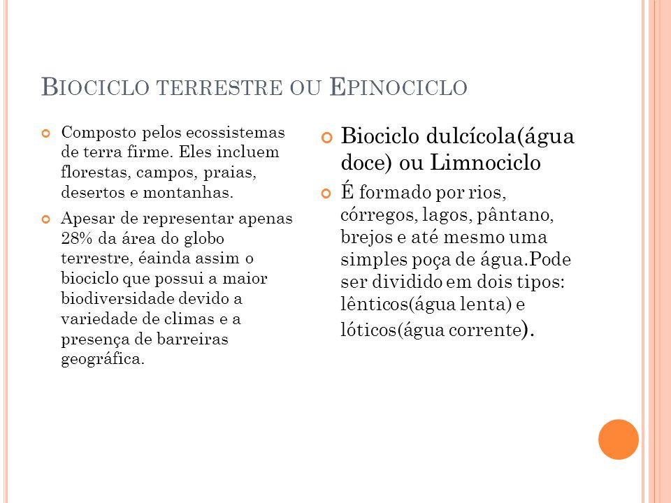 Biociclo terrestre ou Epinociclo
