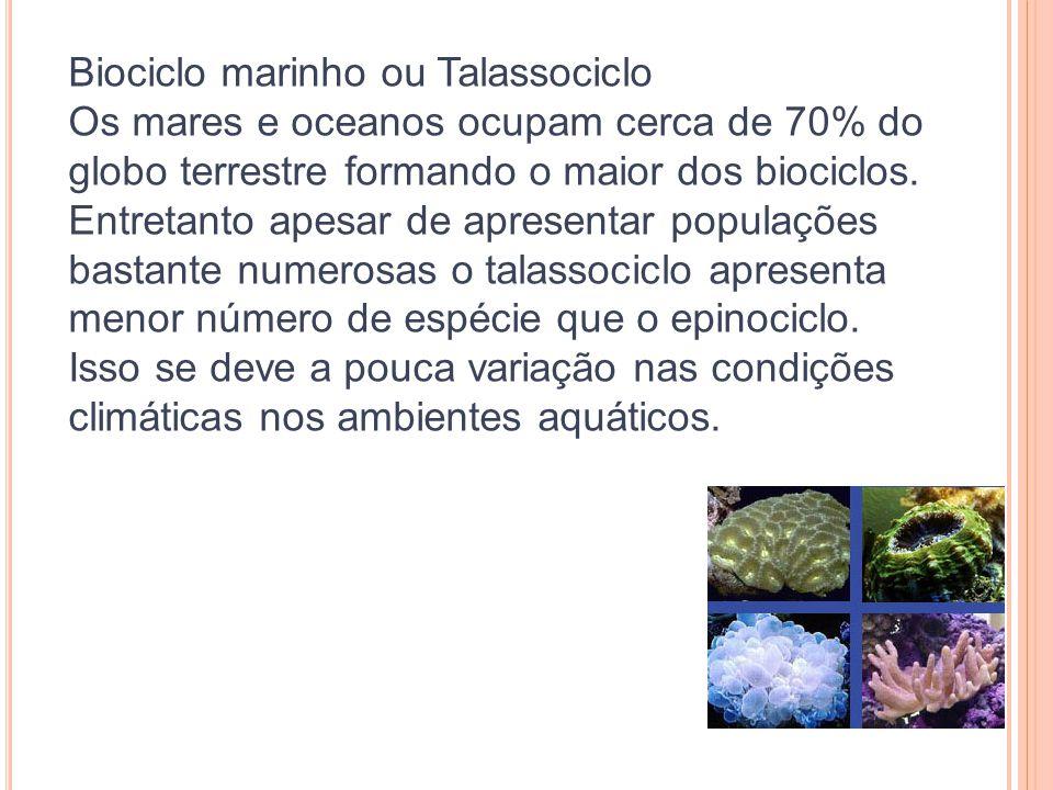 Biociclo marinho ou Talassociclo