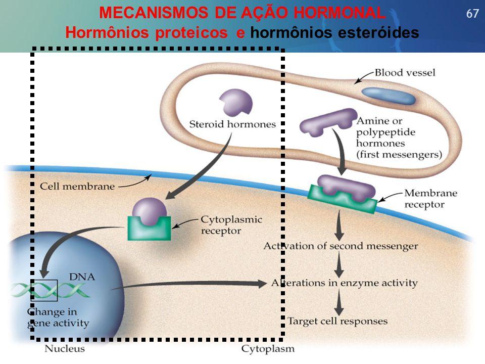 MECANISMOS DE AÇÃO HORMONAL Hormônios proteicos e hormônios esteróides