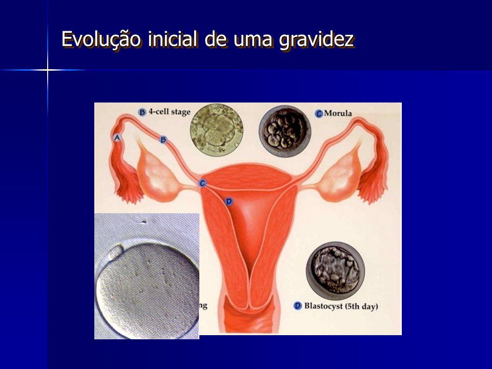Evolução inicial de uma gravidez