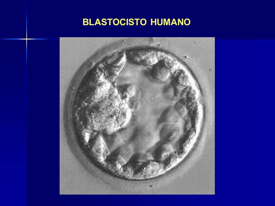 BLASTOCISTO HUMANO
