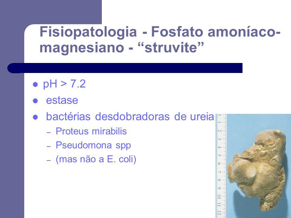 Fisiopatologia - Fosfato amoníaco-magnesiano - struvite