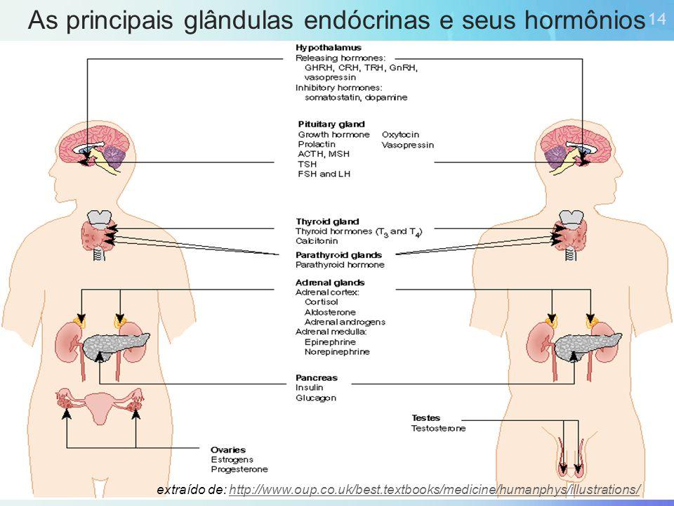 As principais glândulas endócrinas e seus hormônios