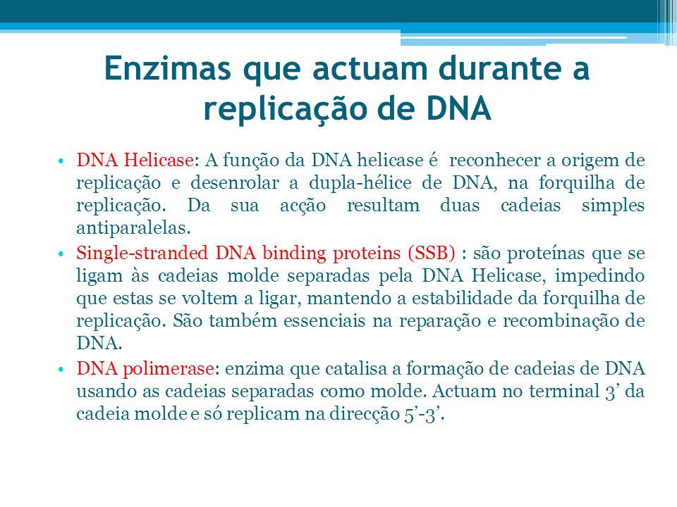 Enzimas que actuam durante a replicação de DNA