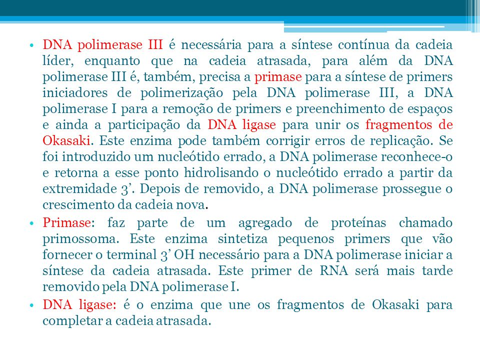 DNA polimerase III é necessária para a síntese contínua da cadeia líder, enquanto que na cadeia atrasada, para além da DNA polimerase III é, também, precisa a primase para a síntese de primers iniciadores de polimerização pela DNA polimerase III, a DNA polimerase I para a remoção de primers e preenchimento de espaços e ainda a participação da DNA ligase para unir os fragmentos de Okasaki. Este enzima pode também corrigir erros de replicação. Se foi introduzido um nucleótido errado, a DNA polimerase reconhece-o e retorna a esse ponto hidrolisando o nucleótido errado a partir da extremidade 3'. Depois de removido, a DNA polimerase prossegue o crescimento da cadeia nova.