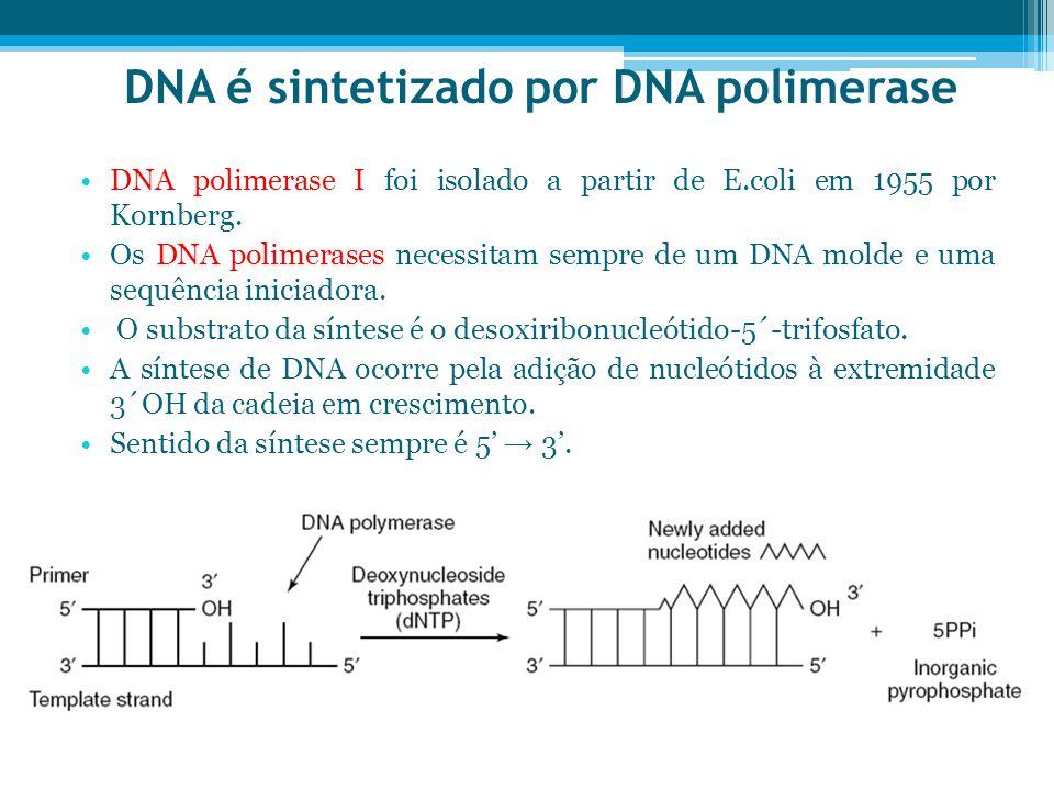 DNA é sintetizado por DNA polimerase
