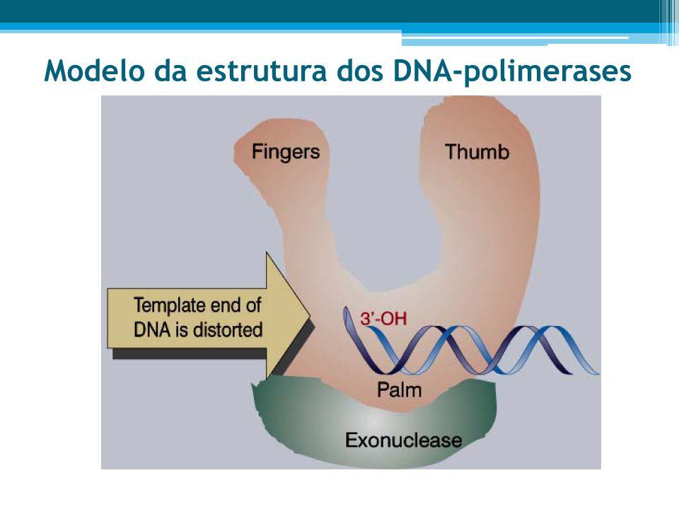 Modelo da estrutura dos DNA-polimerases