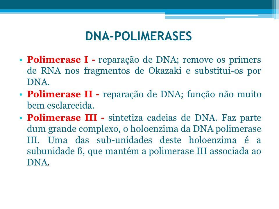 DNA-POLIMERASES Polimerase I - reparação de DNA; remove os primers de RNA nos fragmentos de Okazaki e substitui-os por DNA.