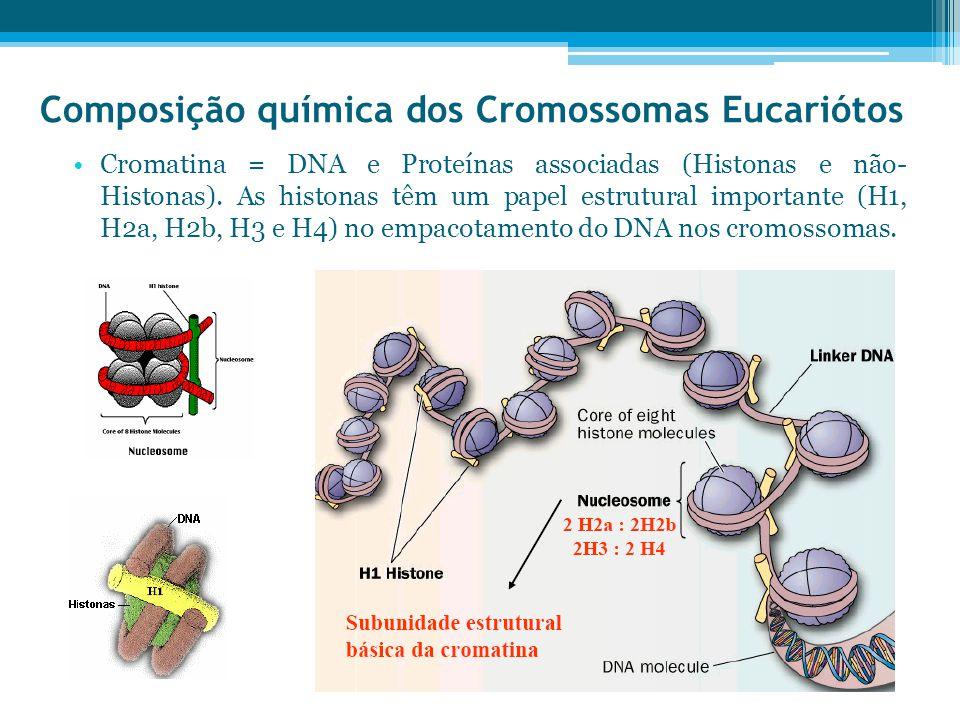 Composição química dos Cromossomas Eucariótos