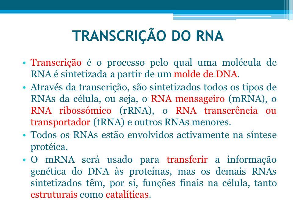 TRANSCRIÇÃO DO RNA Transcrição é o processo pelo qual uma molécula de RNA é sintetizada a partir de um molde de DNA.