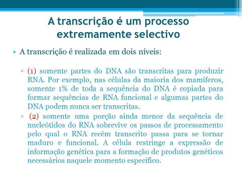 A transcrição é um processo extremamente selectivo